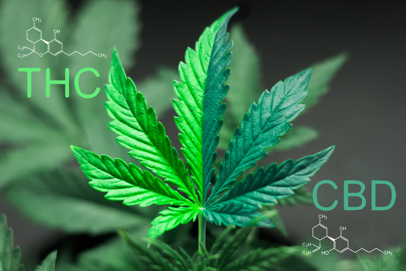 Medical Marijuana Drug Testing